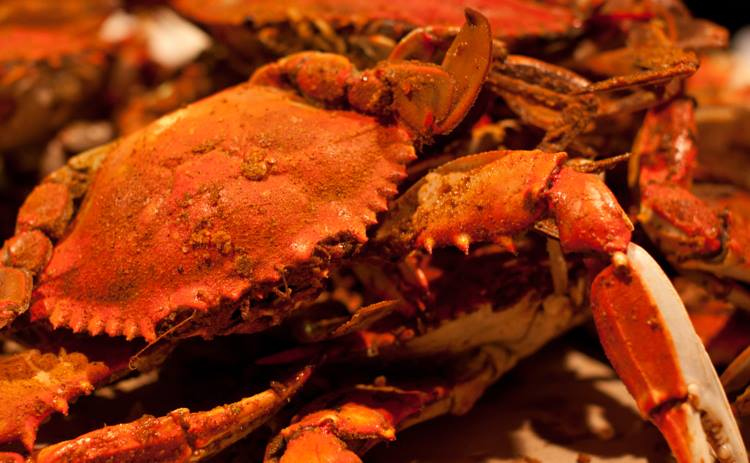 Best Steamed Crabs at the River Shack in Charlestown, Maryland