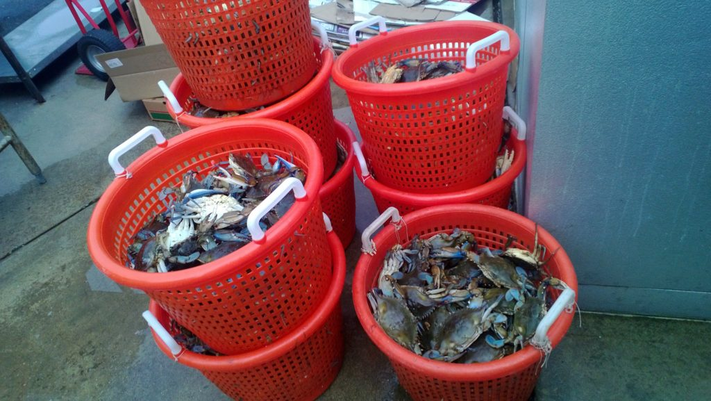 All you can eat Steamed Crabs at the River Shack in Charlestown, Maryland