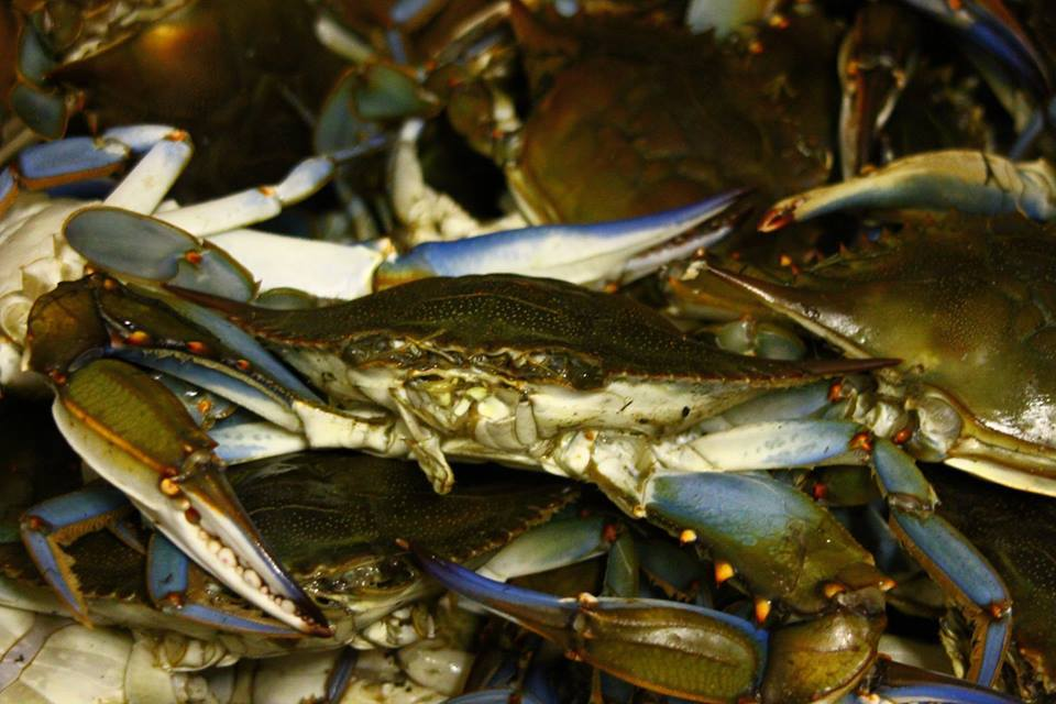 all you can eat crabs Maryland