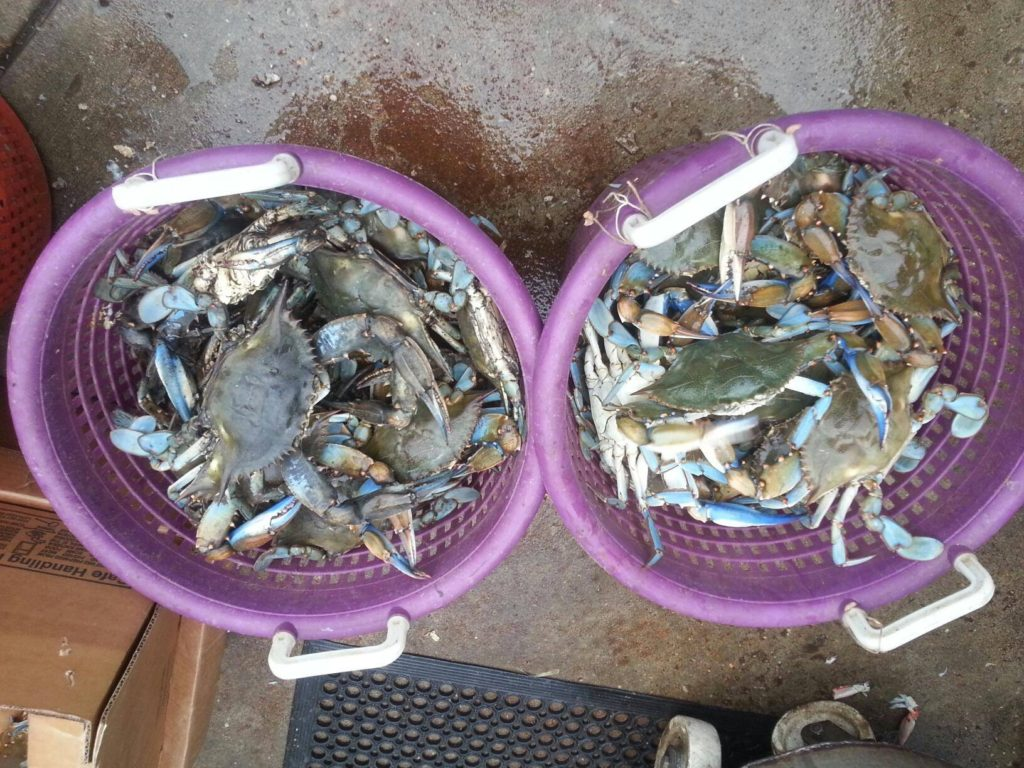 Delicious Steamed Crabs at the River Shack in Maryland