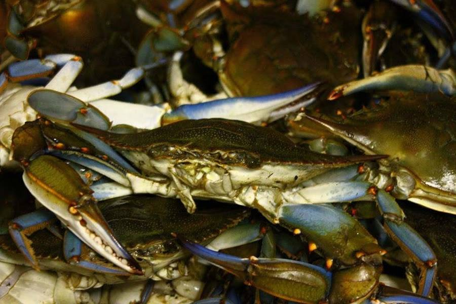 Delicious Steamed Crabs Maryland