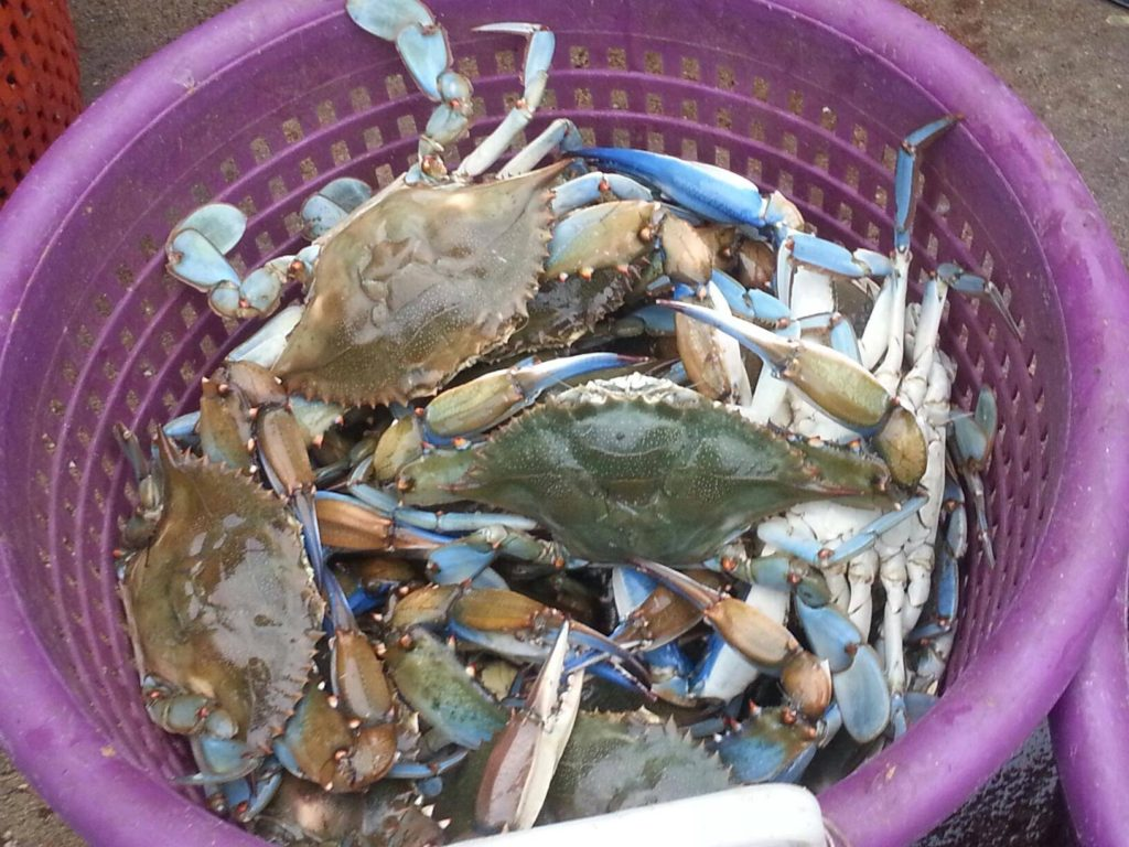 Bushels of Steamed Crabs at the River Shack in Maryland